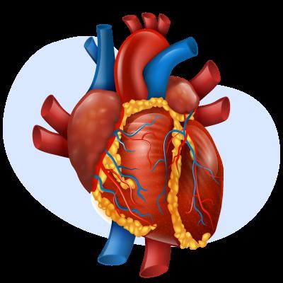 Что такое инфаркт. Реабилитация после инфаркта